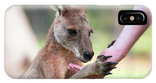 IPhone Case featuring the photograph Kangaroo by Rob D Imagery