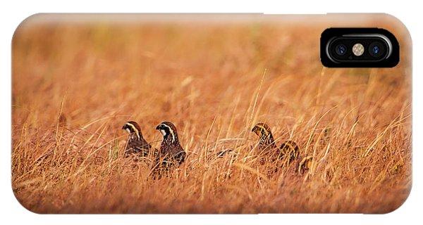 IPhone Case featuring the photograph Kansas Bobwhites by Jeff Phillippi