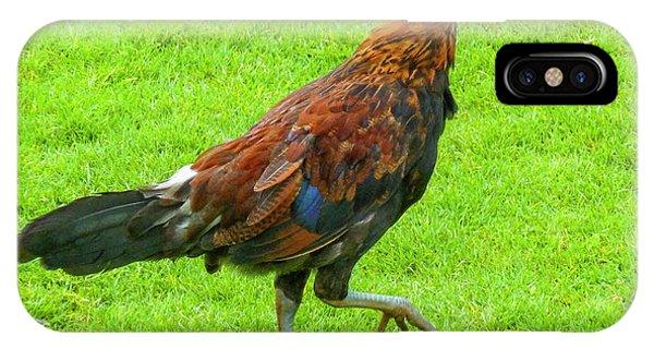 Kauai Rooster IPhone Case