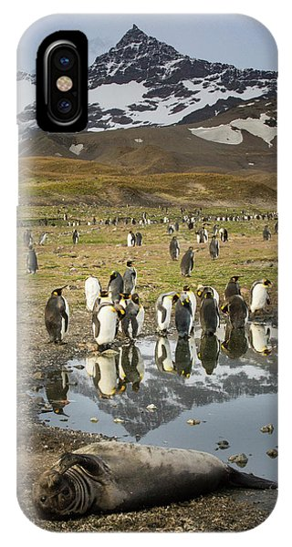 King Penguin Rookery Phone Case by Tom Norring
