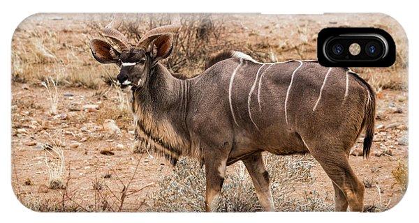 Kudu In The Kalahari Desert, Namibia IPhone Case