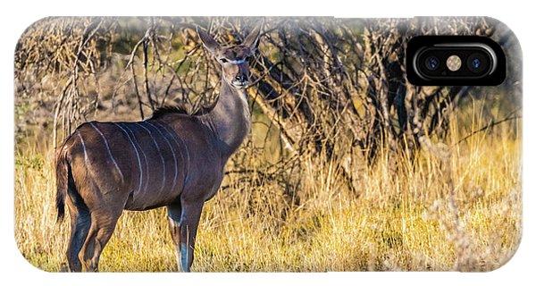 Kudu, Namibia IPhone Case