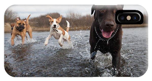 Adorable iPhone Case - Labrador Retriever And Friends Having by Eric Gevaert