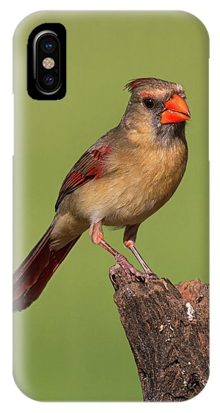 Lady Cardinal IPhone Case