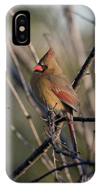 Lady Cardinal IPhone Case