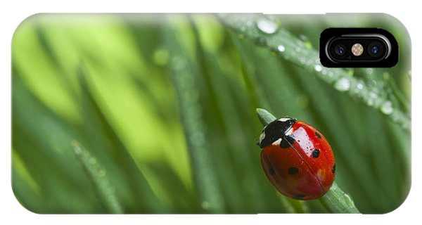 Small iPhone Case - Ladybird On Grass by Didecs