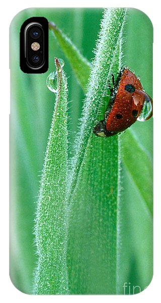 Water Droplets iPhone Case - Ladybug With Large Dew Droplet On Back by Marc Parsons