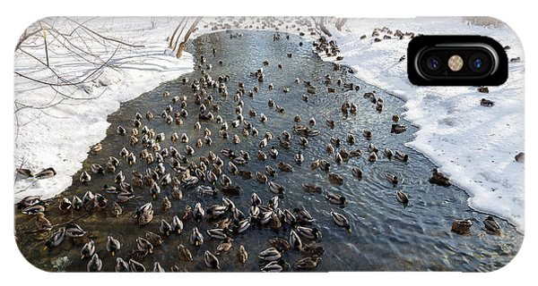 Adult iPhone Case - Large Amounts Of Ducks In The Winter In by Mikecphoto