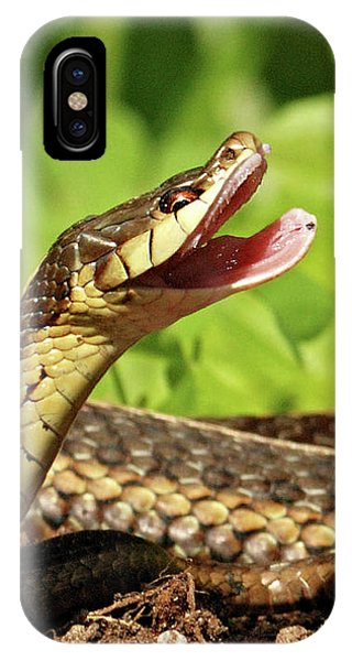 Laughing Snake IPhone Case
