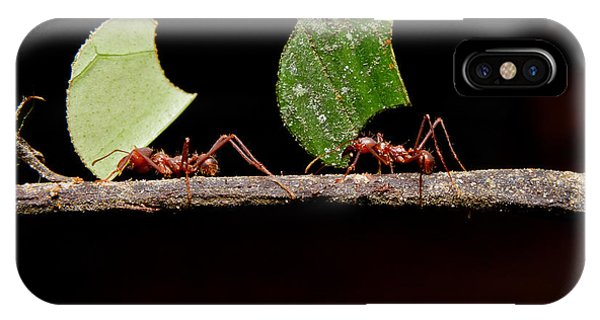 Parasol iPhone Case - Leaf Cutter Ants, Carrying Leaf, Black by Fotos593