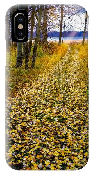 Leaves On Trail IPhone Case