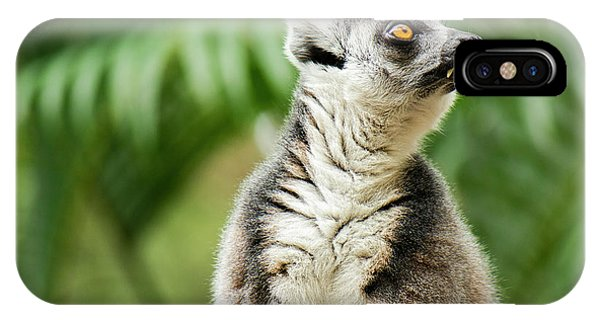 IPhone Case featuring the photograph Lemur By Itself Amongst Nature. by Rob D Imagery