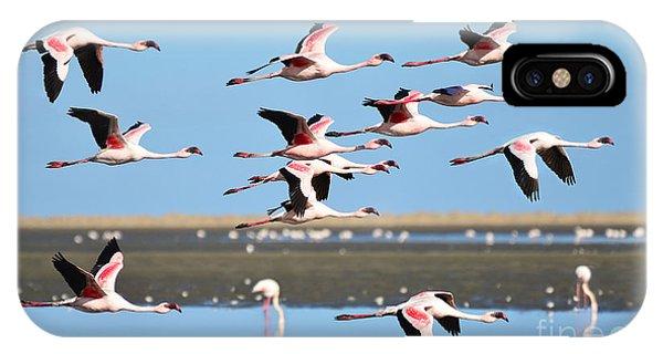 In Flight iPhone Case - Lesser Flamingo, Phoenicopterus Minor by Pictureswild