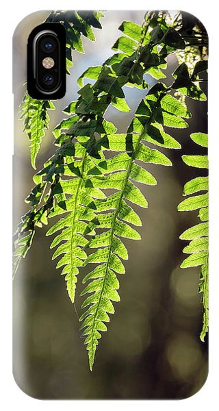 IPhone Case featuring the photograph Licorice Fern by Whitney Goodey