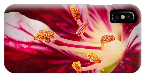 Lilly iPhone Case - Lily Flower Stamen Close Up by Dancestrokes