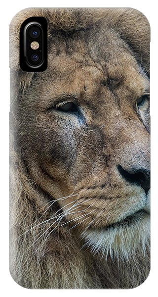 IPhone Case featuring the photograph Lion by Anjo Ten Kate