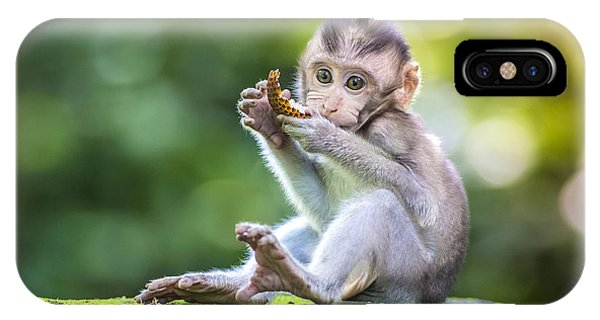 Small iPhone Case - Little Baby-monkey In Monkey Forest Of by Trubavin