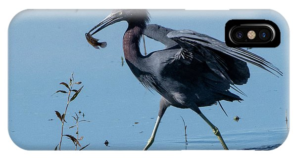 Little Blue Heron With Fish IPhone Case