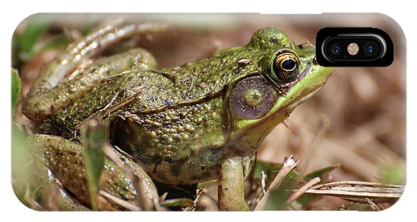 Little Green Frog IPhone Case