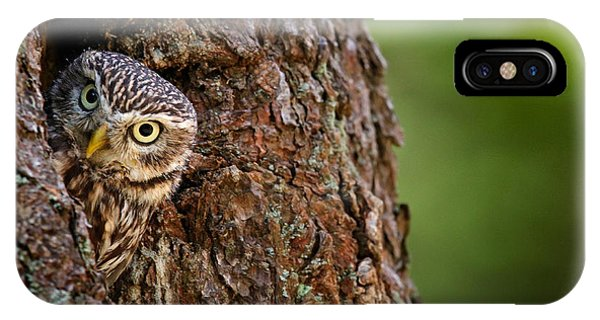 Swedish iPhone Case - Little Owl, Athene Noctua, In The by Ondrej Prosicky