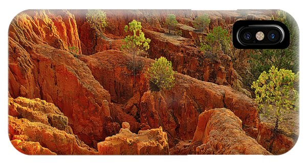 Little Pine Trees Growing On The Valley Cliffs IPhone Case