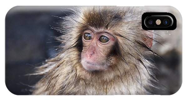 Young iPhone Case - Little Snow Monkey At The Jigokudani by Ayusloth
