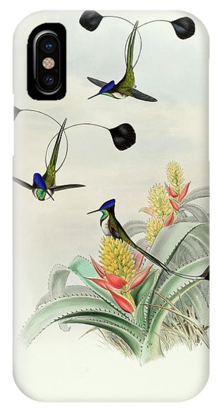 Humming Bird iPhone Case - Loddigesia Mirabilis by John Gould