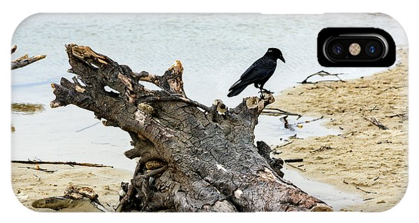Lone Carmel Crow Atop Driftwood IPhone Case