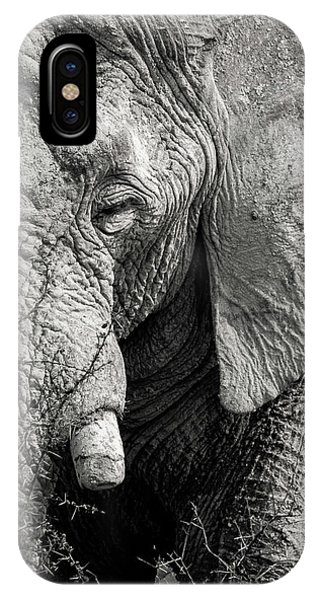 Look Of An Elephant IPhone Case