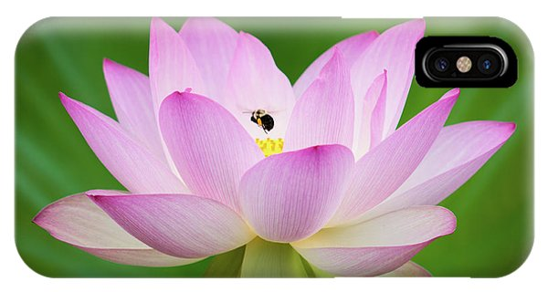 Lotus Flower And Bumble Bee IPhone Case