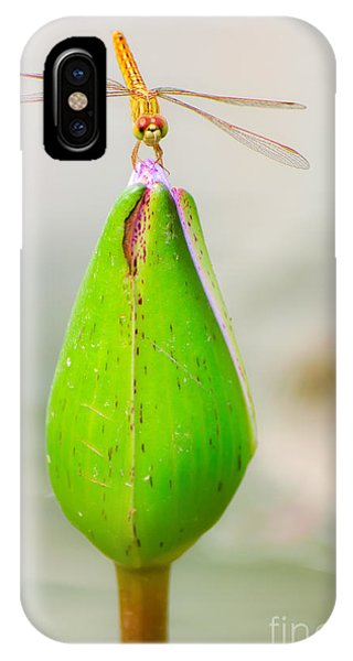 Aquatic Plants iPhone Case - Lotus Flower Dragonfly by Here Asia