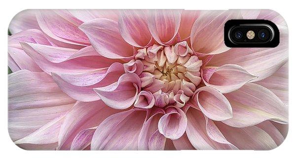 Lovely Dahlia IPhone Case