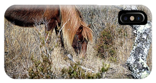 IPhone Case featuring the photograph Lunchtime For Assateague's Gokey Go Go Bones by Bill Swartwout Photography