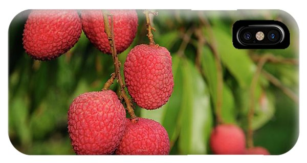 Lychee Fruit On Tree IPhone Case
