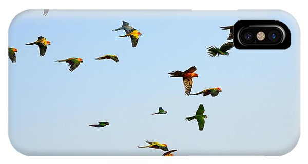 Flight iPhone Case - Macaw And Sun Conure Flock Of Flying In by Jeep2499