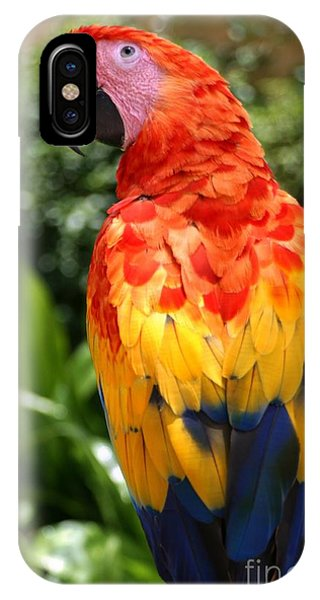Plumes iPhone Case - Macaw Sitting On A Branch by Paul Banton