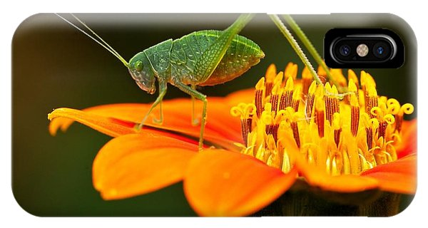 Macro iPhone Case - Macro Photos From Insects, Nature And by Dudu Linhares