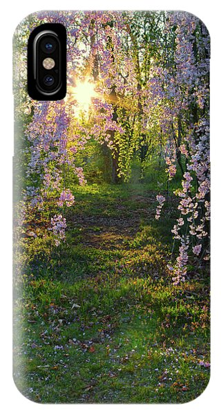 Magnolia Tree Sunset IPhone Case
