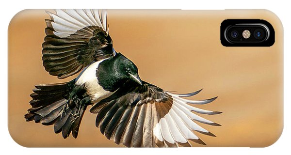 Magpie Beauty IPhone Case