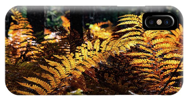 Maine Autumn Ferns IPhone Case