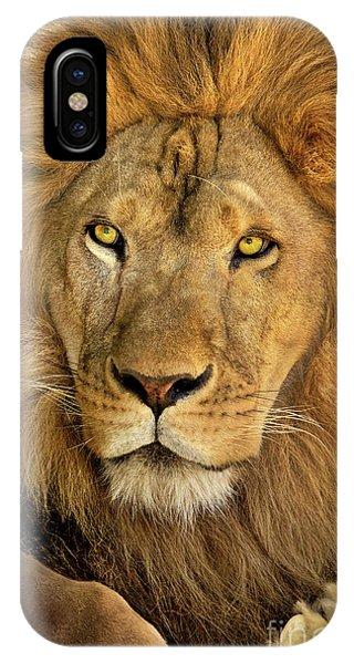 Male African Lion Portrait Wildlife Rescue IPhone Case