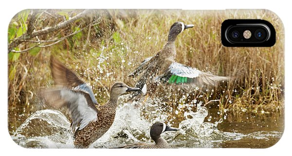Teal iPhone Case - Male And Female Blue-winged Teals by Adam Jones