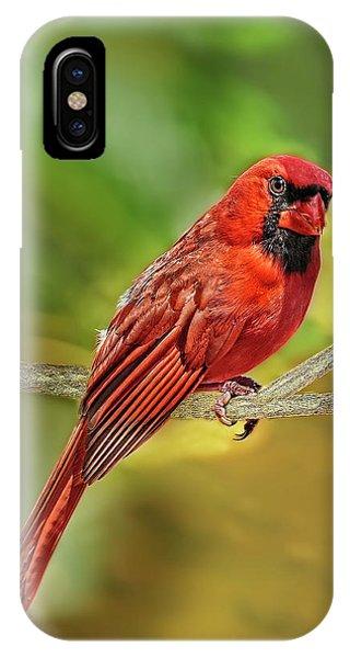 Male Cardinal Headshot  IPhone Case