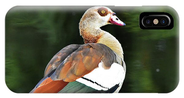 Male Egyptian Goose IPhone Case