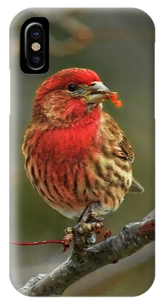 Male House Finch With Crabapple IPhone Case