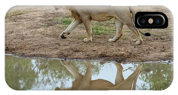 Male Lion And His Reflection IPhone Case