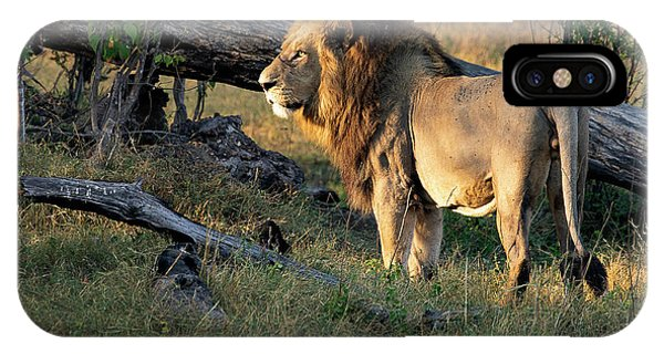 Male Lion In Botswana IPhone Case