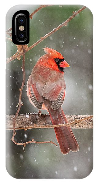 Male Red Cardinal Snowstorm IPhone Case