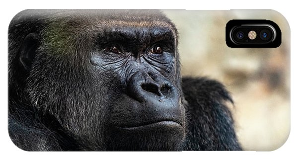 Male Western Gorilla Looking Around, Gorilla Gorilla Gorilla IPhone Case