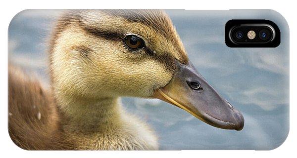 Mallard Duckling IPhone Case